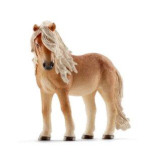 HC Island Pony Stute