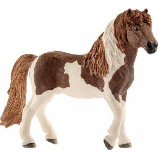 HC Island Pony Hengst