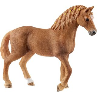 HC Quarter Horse Stute