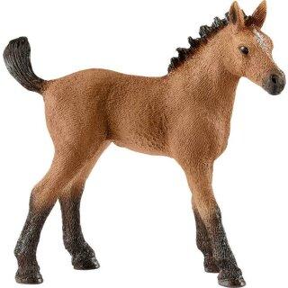 Quarter Horse Fohlen (a)