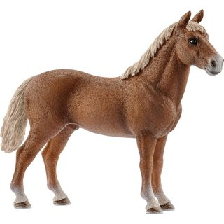 Morgan Horse Hengst (a)