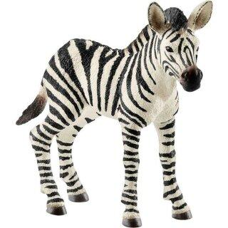 Zebra Fohlen