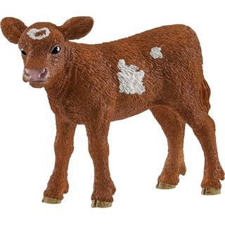 Texas Longhorn Kalb