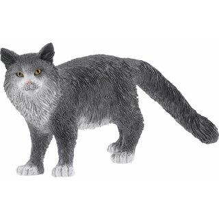 Maine-Coon-Katze
