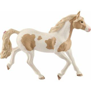 HC Paint Horse Stute